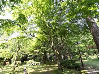風雅の宿長生館 四千坪の大庭園で森林浴とラドン浴をお楽しみください。