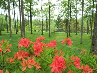 蓼科東急ホテル プライベートガーデンには四季折々の草木・花々が咲き誇ります