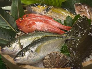 季一遊 食事はお魚のお選びができます