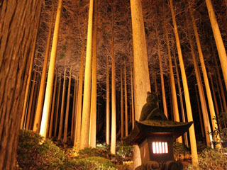 霧島ホテル ライトアップした百年杉庭園