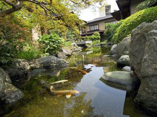 あたみ石亭別邸 桜岡茶寮 季節の樹木と銘石、錦鯉の泳ぐ池。伝統的な日本庭園が美しい一時を紡ぎます