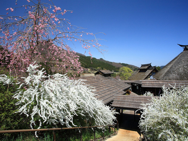 かやぶきの郷薬師温泉旅籠 4月の風景