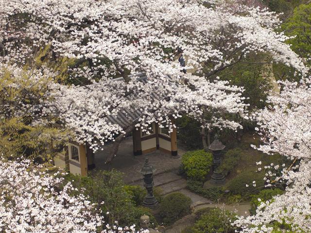 都心にいることを忘れさせる約2万平方mの日本庭園