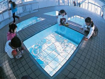 海上45mのガラス床から渦を覗いてみよう