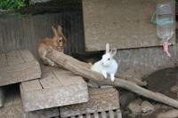 八幡野温泉郷 杜の湯 きらの里 【ファミリー】里山の中には田んぼや畑、ウサギ小屋や鳥小屋がある。子供とえさをあげたり、散策をしてゆっくりするのがおススメ。