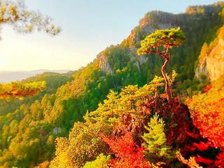 湯の風HAZU 周辺観光「鳳来寺山の紅葉」 投稿者:Onezuさん