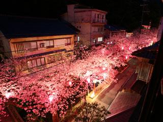 泉都 春の桜風景