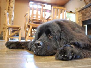 やまびこ旅館 看板犬モモがロビー付近でお客様をお出迎えいたします