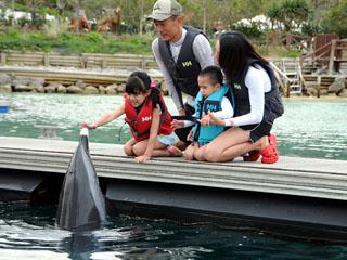 ルネッサンスリゾート オキナワ 海に入らずにイルカとふれあい学べるプログラム。小さなお子様も安心して参加できる