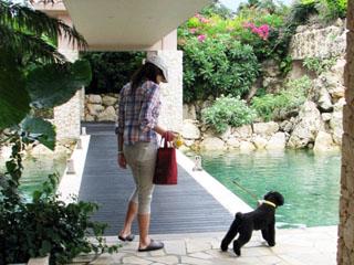 宮古島 南西楽園 シギラベイサイドスイート アラマンダ <宮古島> 愛犬と一緒に至福のリゾートステイを楽しみたい