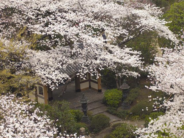 都心にいることを忘れさせる約2万平米の日本庭園