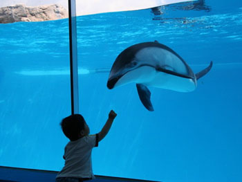 楽しいショーがいっぱいの下田海中水族館