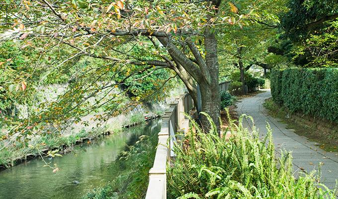 大人のお湯旅「伊豆高原周辺の温泉」