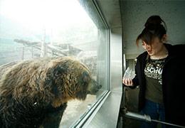 筒を使ってクマに間近で餌をやる。これはオスのクマ